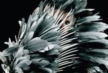 Pattern / FEATHER