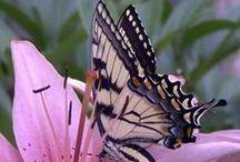 Les plus beaux Papillons / by Line Huot