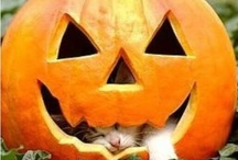 Halloween / by Line Huot