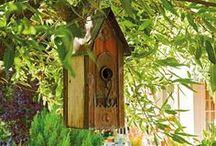 Pour les oiseaux / by Line Huot