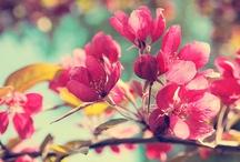Petals / by Cymoni Larsen
