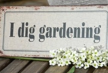 {}{}{}  gardening ideas   {}{}{} / Got green fingers?  You came to the right place