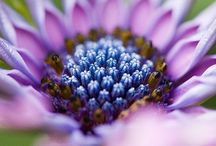 colors and bouquets / colors and flowers / by Erin Boardman