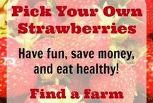 Let's Go Strawberry Picking! / by Saving by Design