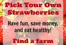 Let's Go Strawberry Picking!
