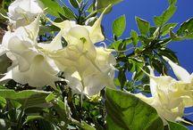 Tropical Treasures / Tropical plants