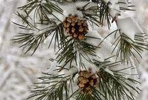 Winter Wonderland / by Honey + Lime