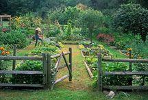 Garden / by Amanda Proctor