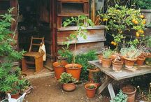 Homey Garden / by Amanda Proctor