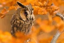 Hoot / by femme lady