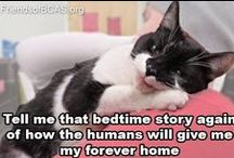 Shared Purrr ~~ Cat Board / Happy Holidays.. don't forget kitty this holiday shopping - remember the cat nip! / by Coffee is Bliss