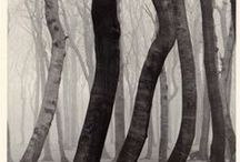 Ι <3 trees