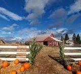 Fall / Fall festivals, flavors and foliage in the Salem, Oregon, area.