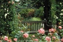 gardens / by ℓℴvℯ