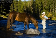 Fly Fishing / Fly Fishing... my passion. / by Millie Alford