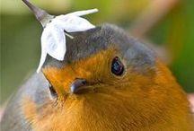 Birds / by Sherri Webb