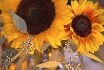Sunflowers / by Sherri Webb