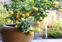 Gardening / by Nicky Maynard