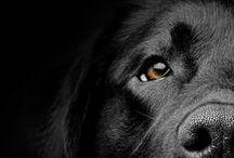 Dogs & besties...