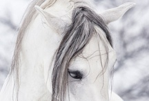 Horses / by Bieb @ Fatfatsheep