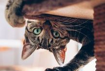Like Cats & Dogs / Best photos of #cats & #dogs