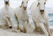 Horsing Around / Best of horse photography #horses