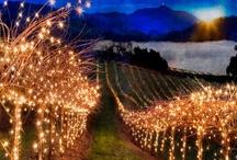 Vineyards & Vino