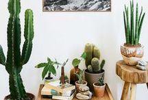 Indoor jungle / by Kerri M.