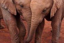 Elephants / by Cheryl Martin
