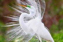 Birds / Best pins about #birds
