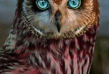 Owls / I love owls.