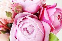 I love Flowers! / Flowers, bridal bouquets, and arrangements.  / by Lauren Mann