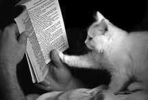 Cats- Facts and Books / by Deb PelletierCouture