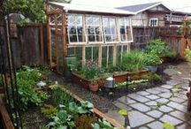 Greenery And Garden / Growing & gardening tips, structures, and the likes.