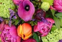 Beautiful flowers and gardens / by Christi An