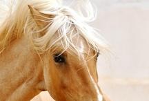 My Kingdom for a Horse / Horses, Horses, Horses / by Lynn Tupper