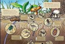 The Dirt on Soil / Soil science, biodiversity, bugs, slugs, and just about every other academic topic for Teaching in the Garden / by April Ross