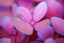 Flowers & Garden / Garden