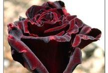 FLEURES, SONT SI BELLES / buscando las flores con las que Mari educo mi mirada / by Susana Smulevici