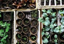 Greenery - Propagate & Grow