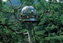 TreeHouses / by Lewy Lewy