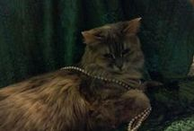 Madi cat / The cutest, sweetest, smartest cat! From rescue to queen of the house. / by Terri Wardle