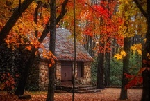 Autumn Splendor / I love everything about autumn, the changing colors of all the leaves and their beautiful colors of the sunset,  the fabulous baking to be done and most of all Thanksgiving. / by Karen Sirna