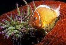 Ocean Life (2) / by Karen Sirna