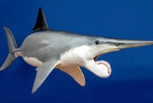 Ocean Life Sharks / by Karen Sirna