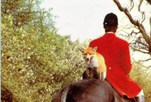 The Chase / No foxes will be hurt when I ride! / by Laura Lewis