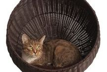 Cat Care / Cat problems, cat care, kitten information, products, training and sweet kitty photos.