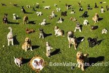 Puppy Training / Puppy training tips, puppy supplies, puppy care info.
