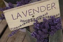 Lavender - lavandula - lavendler