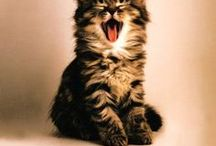 Cat At Home / Products for catifying your home. Everything cats and kittens need for good health and happiness.